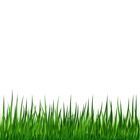 sedge: Vector illustration of Grass Illustration