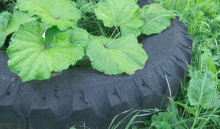 Old tires thrown in the meadow and overgrown grass photo