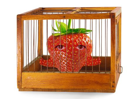 waiting convict: Strawberry, prisoner in the cage made of wood with iron rods, isolated Stock Photo