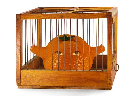 orange, prisoner in the cage made of wood with iron rods, isolated Stock Photo - 7242734