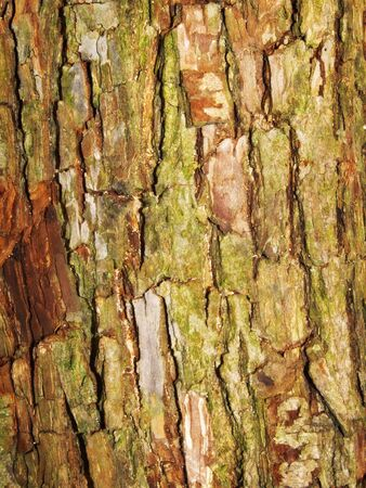 The texture of the old cracked bark. photo