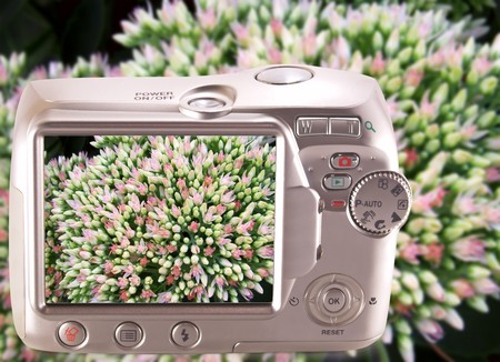 Images of lush inflorescences orpin on-screen camera. photo