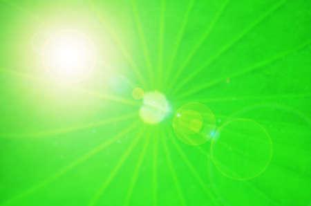 lotus effect: Light effect on lotus leaf Stock Photo