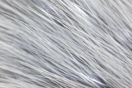 Grey white fur close-up, used as a background or texture. Soft focus Banque d'images - 150191565
