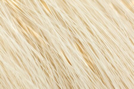 Milky white fur close-up, used as a background or texture. Soft focus Stock Photo