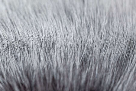Grey white fur close-up, used as a background or texture. Soft focus