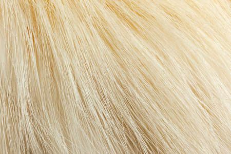 Milky white fur close-up, used as a background or texture. Soft focus Banco de Imagens