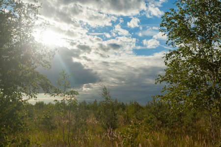 small birch trees in the foreground on the left and right against the blue sky with clouds, through the clouds the sun shines