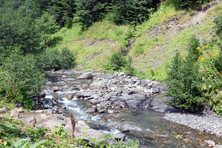 A small narrow mountain river flows past the green slopes