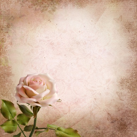 photoalbum: Rose on a vintage background Stock Photo