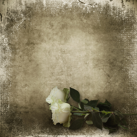 mammy: Vintage shabby background with white roses