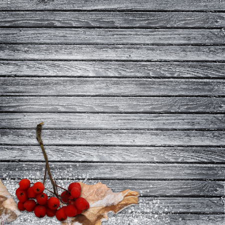 dry leaves: Branch of rowan, dry leaves in frost on a wooden background