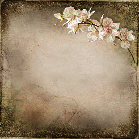 vintage photo: Old vintage background with a branch of orchids Stock Photo