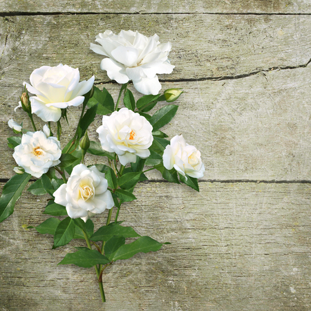 Bouquet of white roses on an old rough wooden background