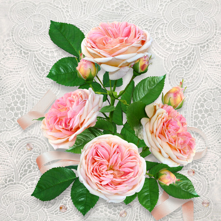 Beautiful pink roses on a lace vintage background