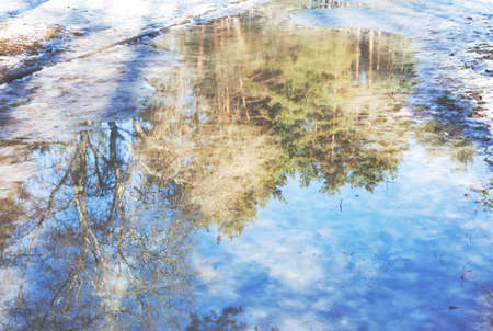 revive: Melting snow and water with reflection pine forest at early spring sunny day