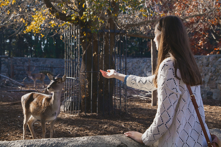beckoning: Young beautiful girl stands near the aviary and beckoning small deer by her hand in city zoo on sunny autumn day