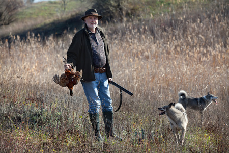 wildfowl: Hunter with a gun, wildfowl and dogs after successful shot