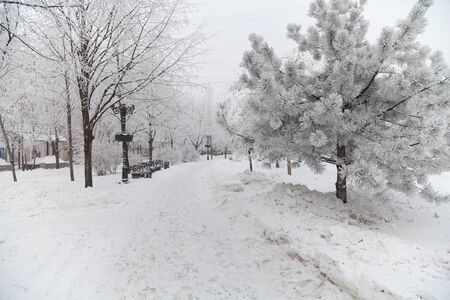 boulevard: Snow-covered trees on a city boulevard at winter day