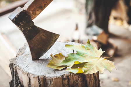 Hatchet sticking in a stump on which lie maple leaves, close-up Stock Photo