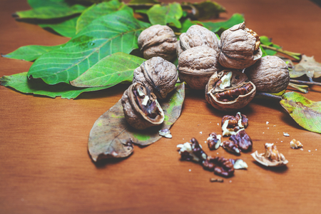 Group of ripe walnuts and green leaves of the tree lie on a brown background. In the foreground are peeled kernels