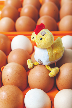 Toy chicken symbol 2017 sits on the orange chicken eggs in a plastic container for carrying eggs