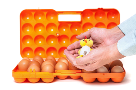 Hands of a man holding a yellow toy chicken symbol of 2017 against the backdrop of an open container of chicken eggs Stock Photo