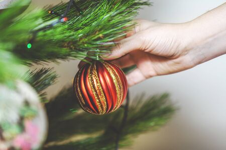 decorate: Decorate the Christmas tree. Womans hand hangs a beautiful toy red ball on green coniferous branch close-up  Stock Photo