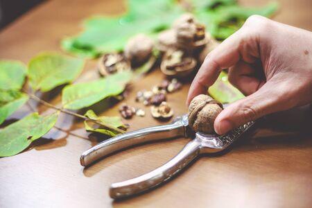 albero nocciolo: Hand male inserts walnut in a metal Nutcracker on a brown table