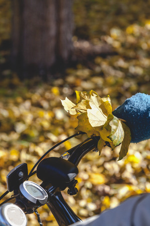 Female hand in knitted mittens with a bouquet of yellow maple leaves holding modern bicycle wheel Stock Photo