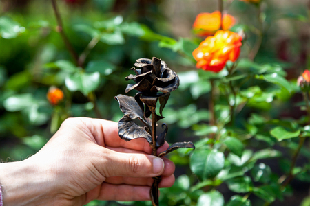 Iron and living rose. Hand holds graceful wrought-iron rose in the background real red rose surrounded by green foliage Stock Photo