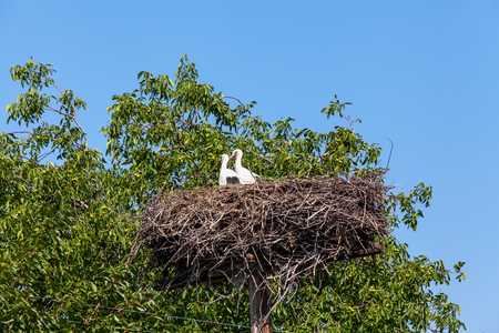 allegory painting: Stork in a large nest surrounded by green trees against the blue sky