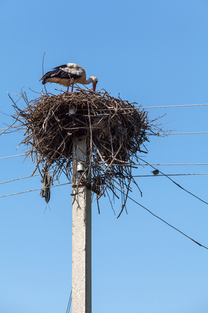 allegory painting: White Stork in a large nest of sticks on a pole against the blue sky