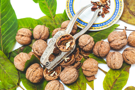 Group of ripe walnuts lying on green leaves on a white background. The lie of the steel tongs for chopping nuts and saucer with purified nuclei