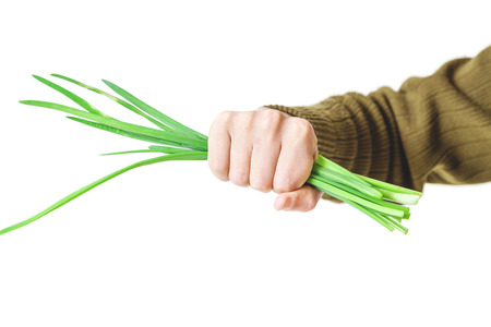 Hand of man holding a bundle of cut green onions on a white background closeup