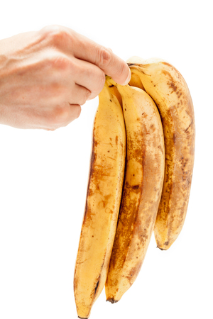 chinese astrology: Hand of man holding a bunch of ripe bananas vertically on a white background