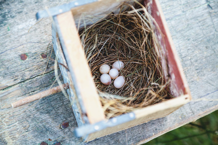 secluded: Five white bird eggs lie in a nest of dry grass at the bottom of a duplex without a lid. View from above Stock Photo