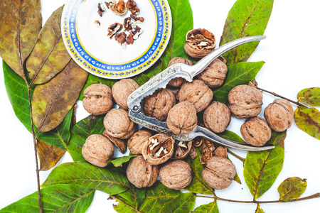 Group of ripe walnuts lying on green leaves on a white background. Nearby lie the steel tongs for chopping nuts and saucer with purified nuclei