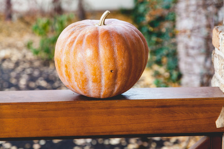 Orange autumn. A large ripe pumpkin lies on a flat wooden railing of the veranda close up  Stock Photo