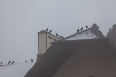 Birds on the roof. A group of black crows sit on the top of a high pitched roof covered with snow