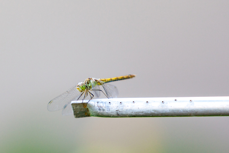 Dragonfly sits on a metal tube on a gray background