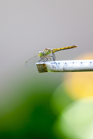 Summer early morning. A green dragonfly sits on an aluminum tube close-up. Behind the rising yellow sun