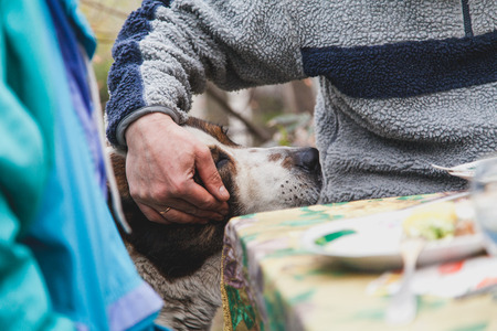 Affectionate master. A hand strokes the Central Asian sheepdog in front of the table in the yard. Dog closed his eyes with pleasure  Stock Photo