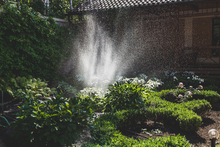 A scattered high stream of water irrigates the green bushes in the yard with a summer day