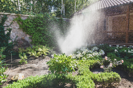 A scattered high stream of water irrigates the green bushes in the yard with a summer day Banco de Imagens - 95828791