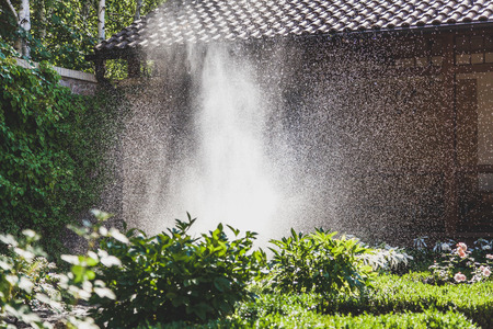 Watering of green plantations. A scattered high stream of water irrigates the green bushes in the yard with a summer day  Banco de Imagens