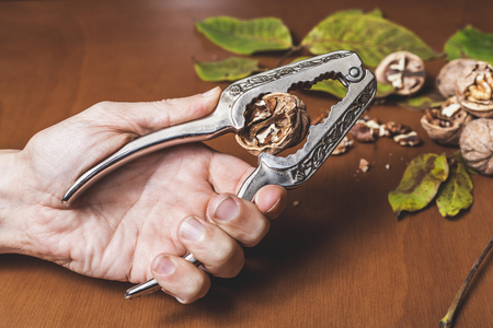 left hand of the man is pecked with a walnut with a metal nut-nut over a brown table. Back of a bunch of nuts  Stock Photo