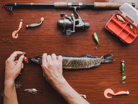 Catch and gear. On the brown table are pike, spinning and lures for catching predatory fish. A fisherman's hand holds a spoon-bait