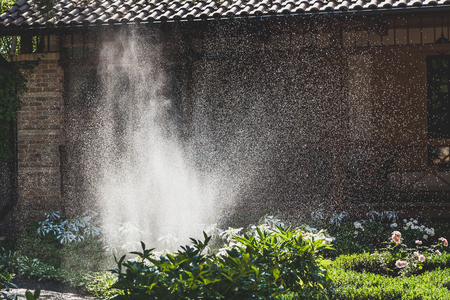 Watering of green plantations. A scattered high stream of water irrigates the green bushes in the yard with a summer day