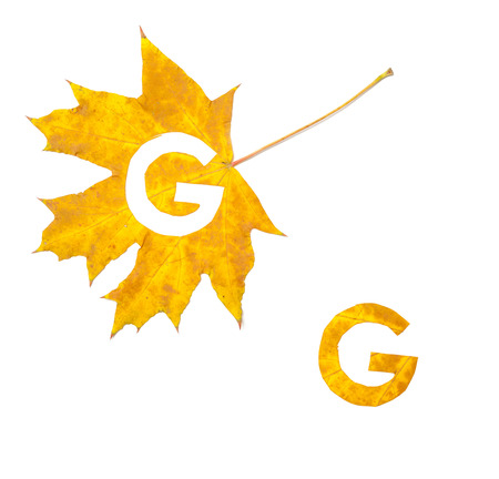 Autumn letters. The letter G is carved from a beautiful yellow maple leaf on a white background. On the sheet, the letter pattern of the letter